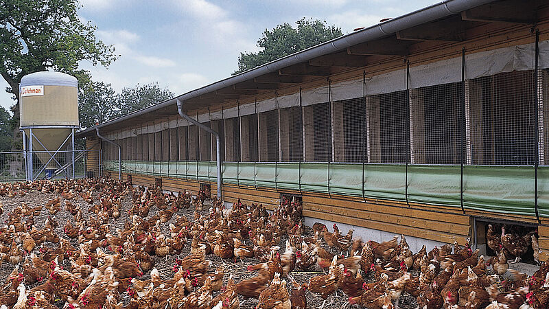 Free range egg production