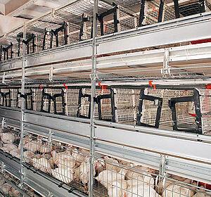Broiler cage AviMax