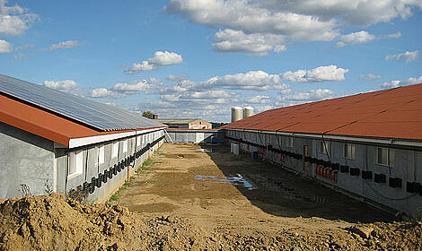 Two successful new houses with Big Dutchman poultry systems for breeder management