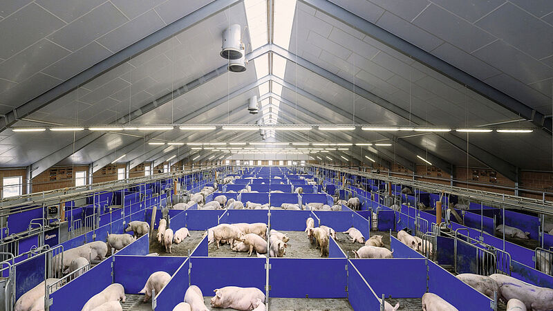 Electronic sow feeding with Call-Inn