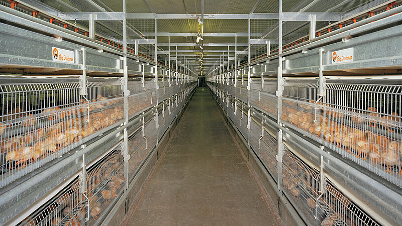 Poultry systems NATURA-Rearing for poultry production