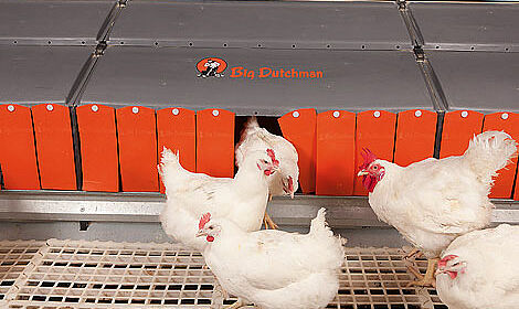 "Modern poultry production: intelligent breeder management with group laying nest ""Relax"""
