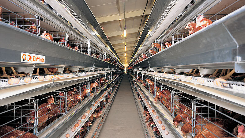 Egg production with UNIVENT poultry cages