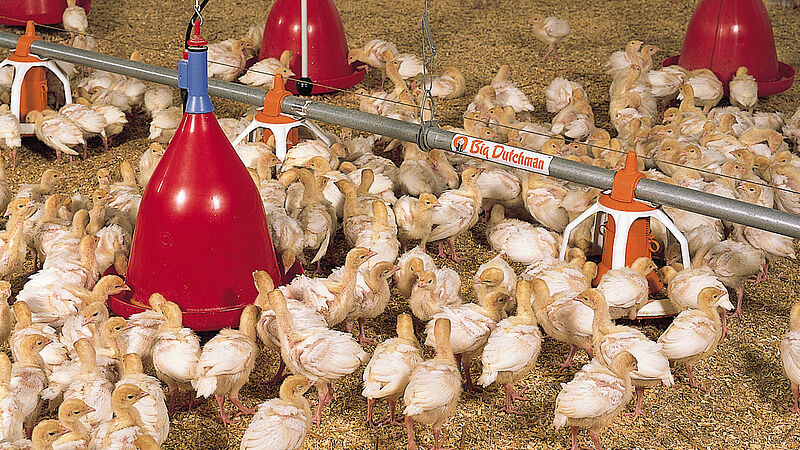 The feed pan Multi Pan and round drinker Jumbo B for poultry growing