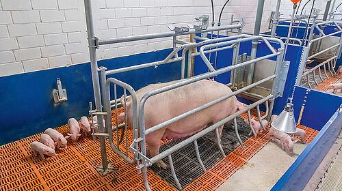 The farrowing frame is closed.