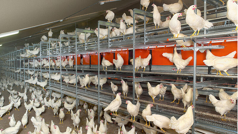 NATURA Step aviary systems for egg production