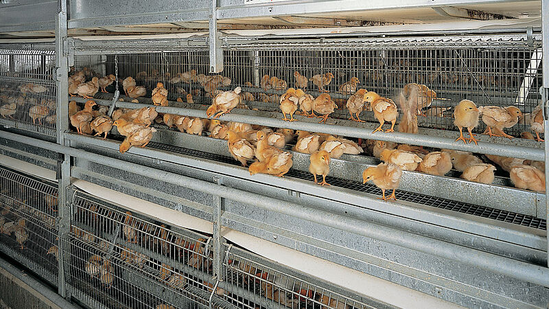 Designed for little ones: NATURA  poultry rearing aviary