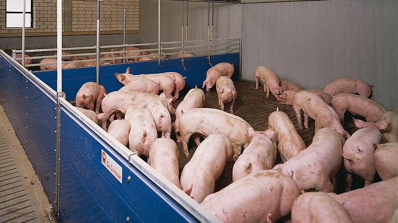 Compartment pig house with HydroMix liquid feeding for pig production