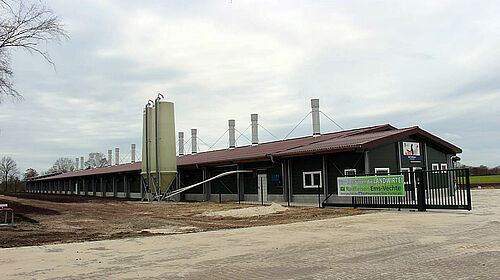 Barn for pullet rearing