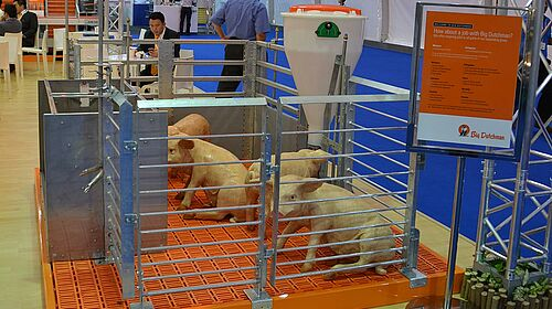 Equipment for pig finishing