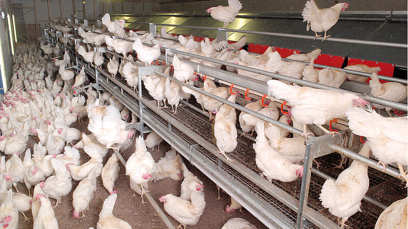 Egg production with NATURA Floor