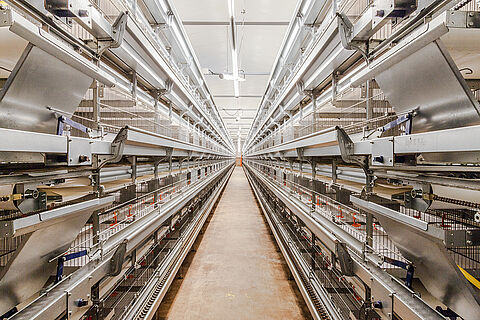 ▷Poultry cages for professional & economic egg production including