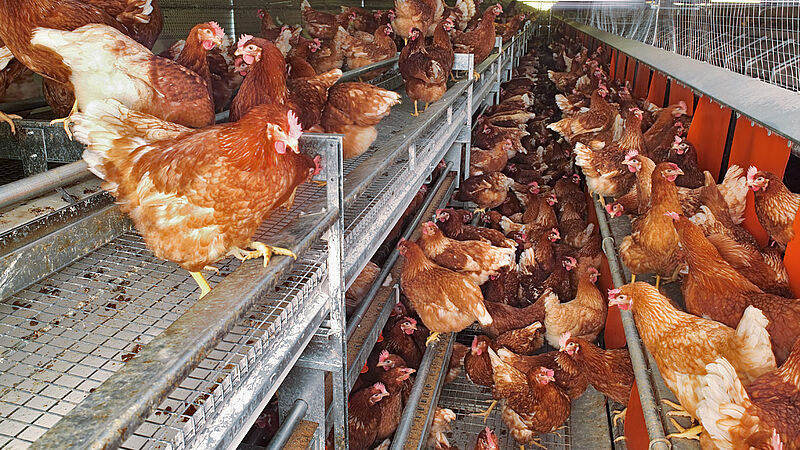 NATURA Nova for free range and barn egg production