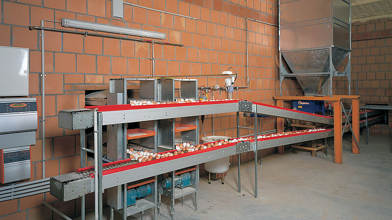 Egg collection in the poultry house