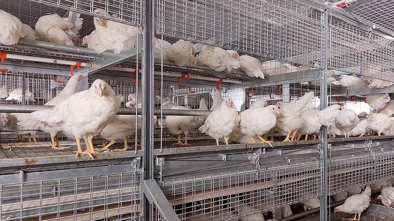 NATURA Primus aviary system