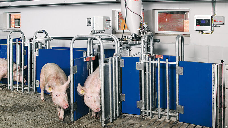 Pig production with electronic sow feeding system Callmatic 2