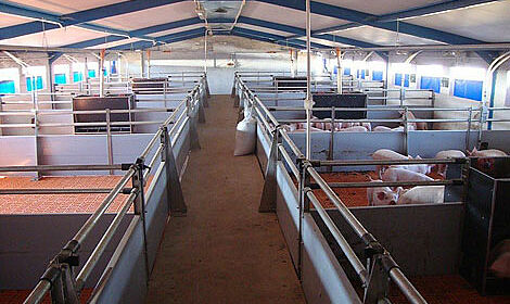 Pig equipment for piglet rearing