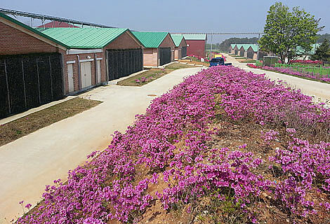 State-of-the-art sow management in Nonsan-si, South Korea.