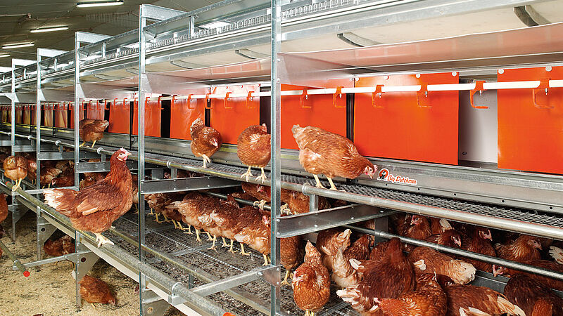 Modern free range and barn egg production with NATURA Colony