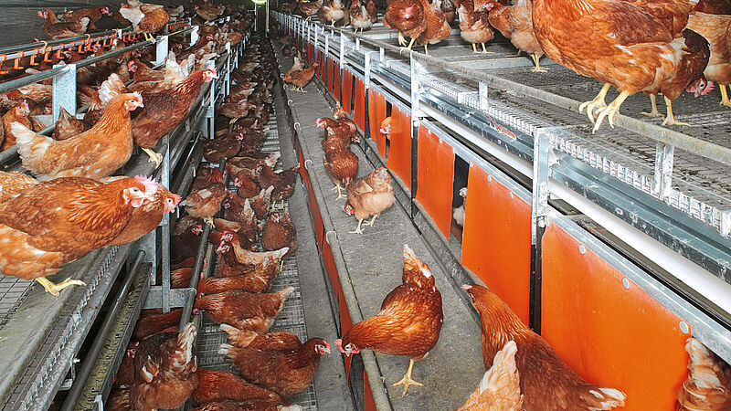 NATURA Nova Twin aviary systems for free range and barn egg production