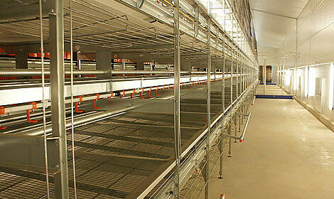 Natura-Nova: economic management of laying hens in aviary systems