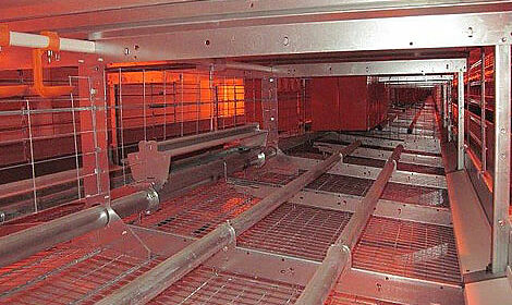 Efficient poultry equipment for housing layers in colonies