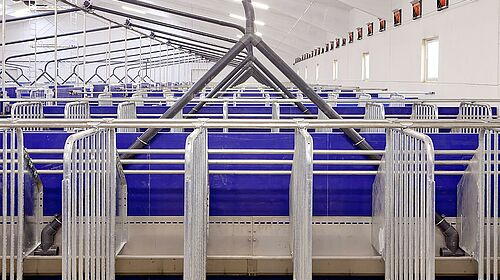 Gestation area for sow management – longitudinal troughs