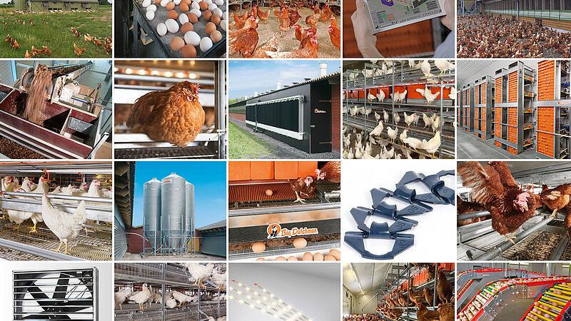 Modern egg production