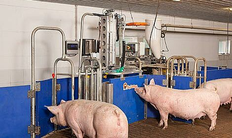 CallMatic Pro: Electronic sow feeding for group housing of sows
