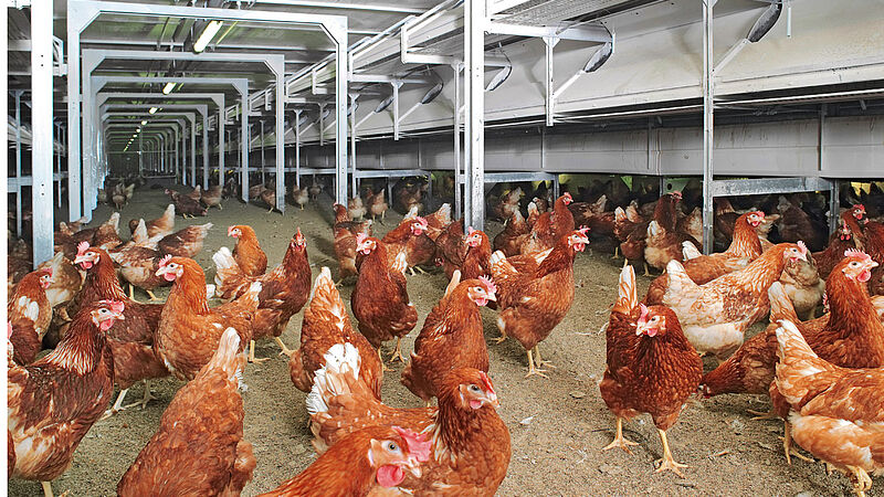 Efficient egg production with NATURA Nova Twin