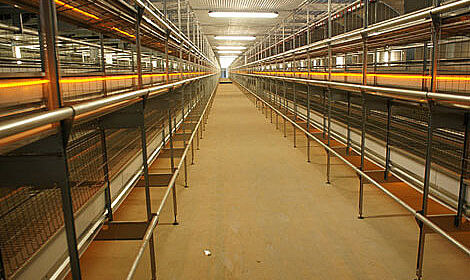 Egg production with Big Dutchman aviary system