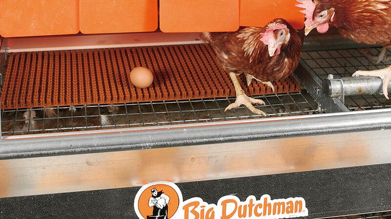 Egg production with Colony-EU