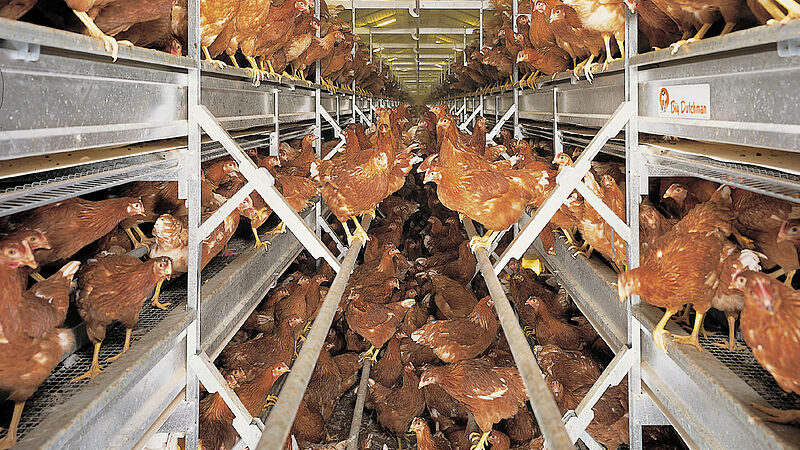 Poultry house with NATURA-Rearing