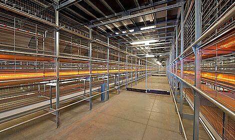 Inside the poultry house: Natura70 for barn egg production