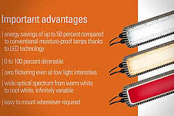 Advertisment: advantages of poultry house lighting with ZEUS