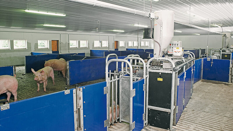 Electronic sow feeding system Callmatic 2