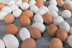 Egg production with Big Dutchman equipment