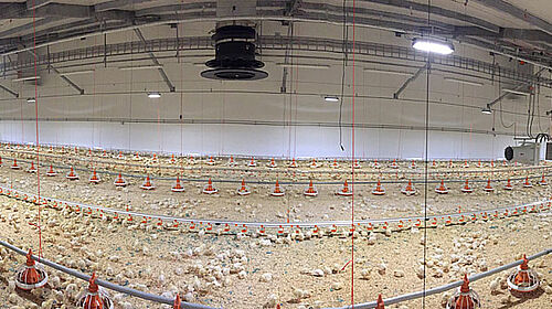 Panoramic photograph showing the inside of the new broiler house