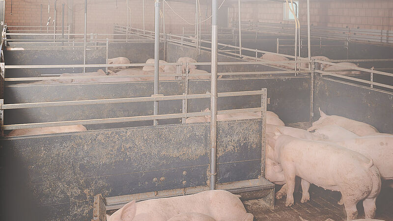 Pig climate control system: CombiCool, the high-pressure fogging system