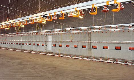 Worldwide coveted technology for successful broiler production: poultry equipment from Big Dutchman