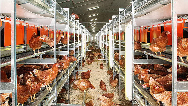 NATURA Colony for free range and barn egg production