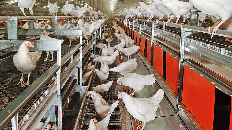 NATURA Nova Twin aviary systems for alternative egg production
