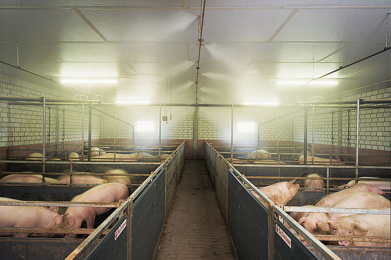 CombiCool – the high-pressure fogging system for pig production