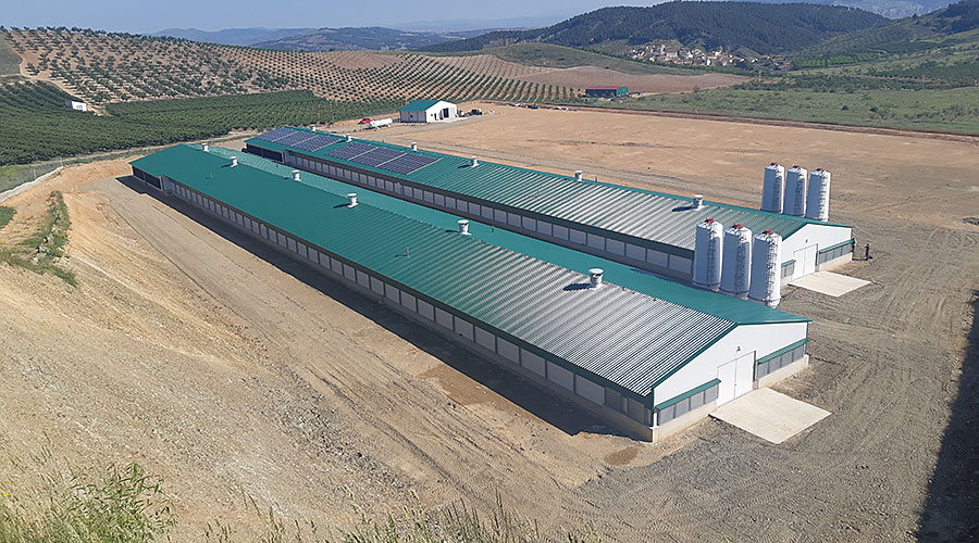Building for broiler production with PV system