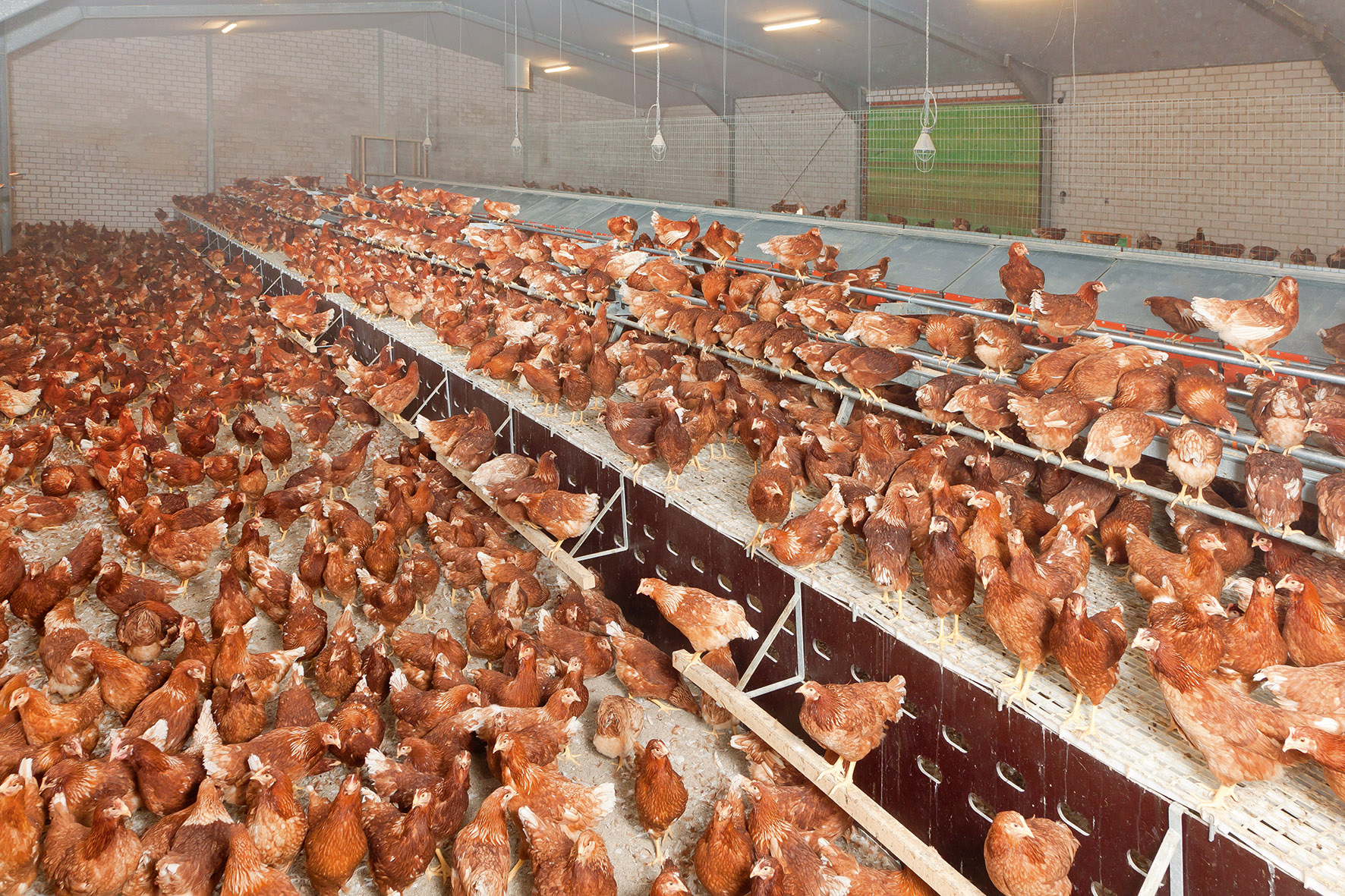 What Is Climate Control >> Aviary systems - poultry equipment and more in pictures ...
