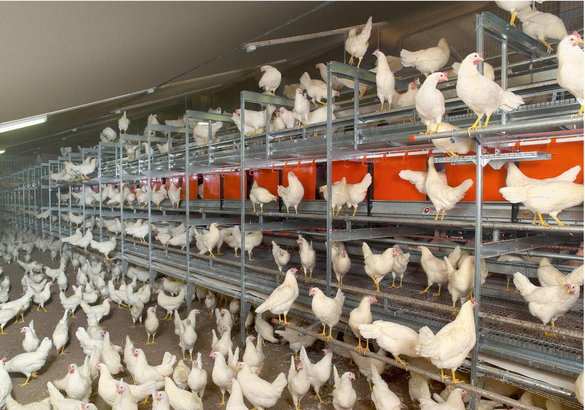 кфх по выращиванию домашней птицы сколько