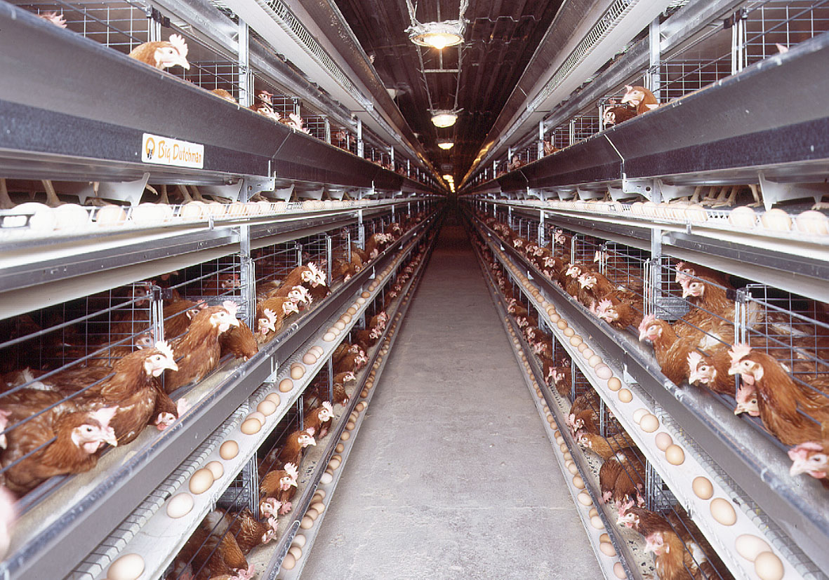 egg production poultry equipment and more in pictures egg production big dutchman. Black Bedroom Furniture Sets. Home Design Ideas
