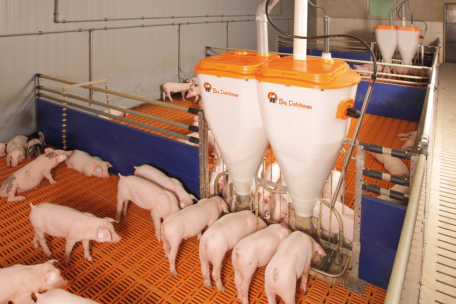Курсовая по скотоводству технология выращивания ремонтного молодняка 58