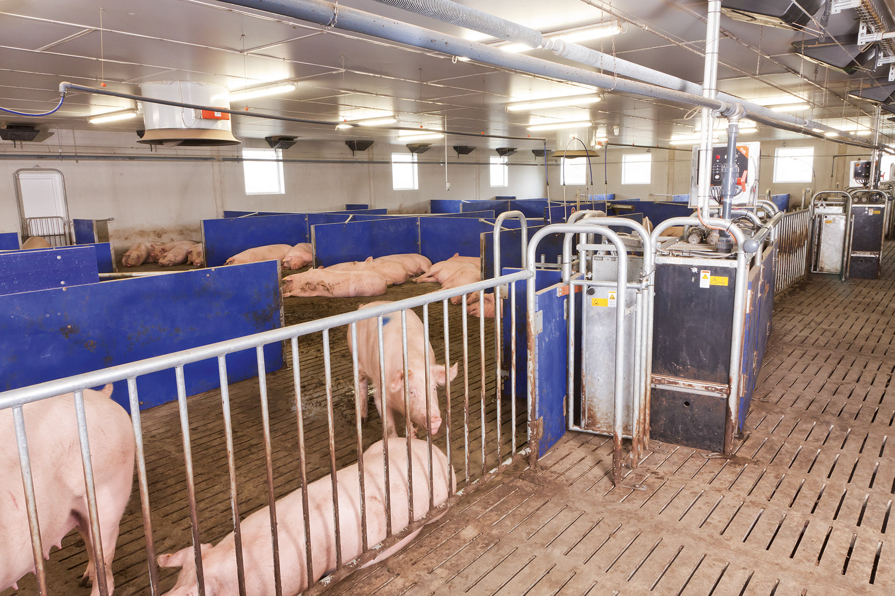 comparison of electronic sow feeders