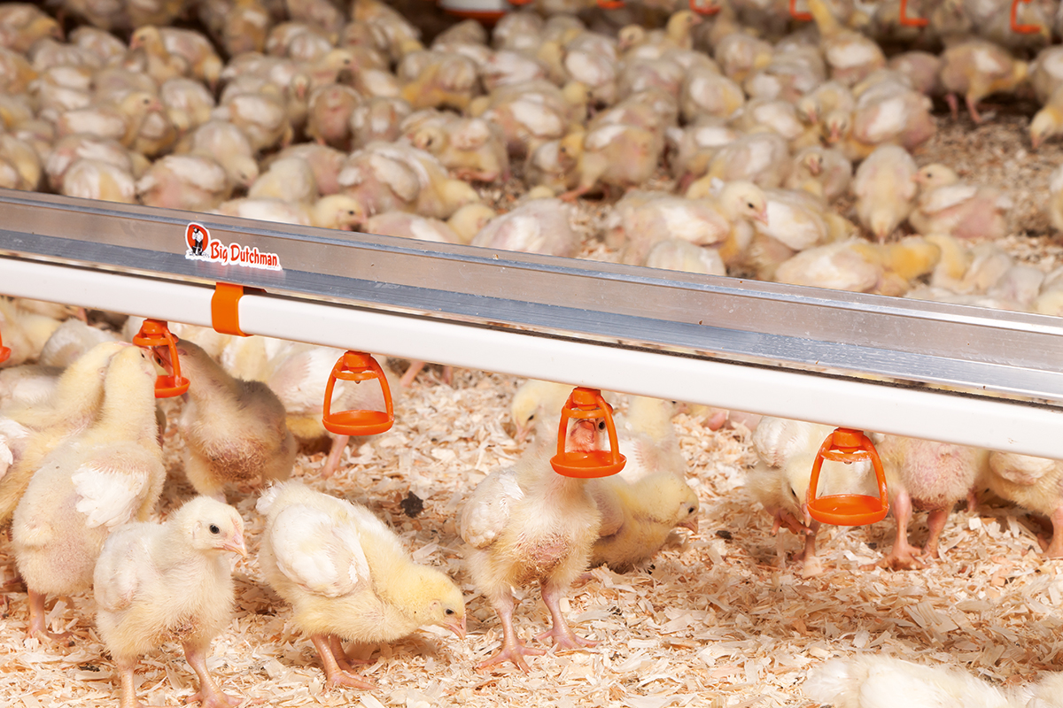 Drinking Systems Poultry Growing Big Dutchman